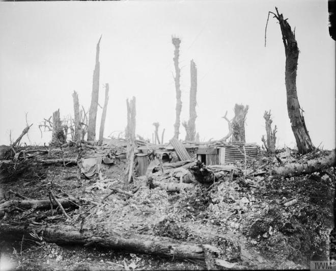 Battle of Flers-Courcelette. 15-22 September 1916. A damaged corrugated iron dugout amid shell-torn tree stumps at Martinpuich.