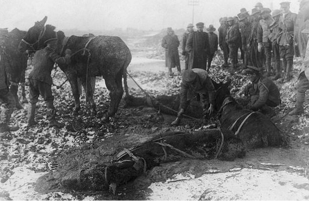 british-troops-attempt-to-rescue-mules-caught-and-trapped-in-a-sea-of-mud-pic-dm-954893028