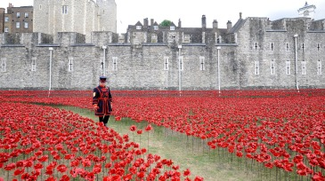 Poppies representing all the UK soldiers who perished in WW1 at the Tower of London.